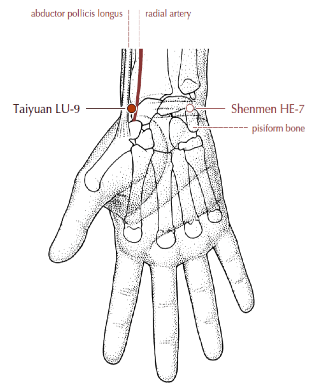 Acupuncture Lung Ashi Points Related Keywords Suggestions